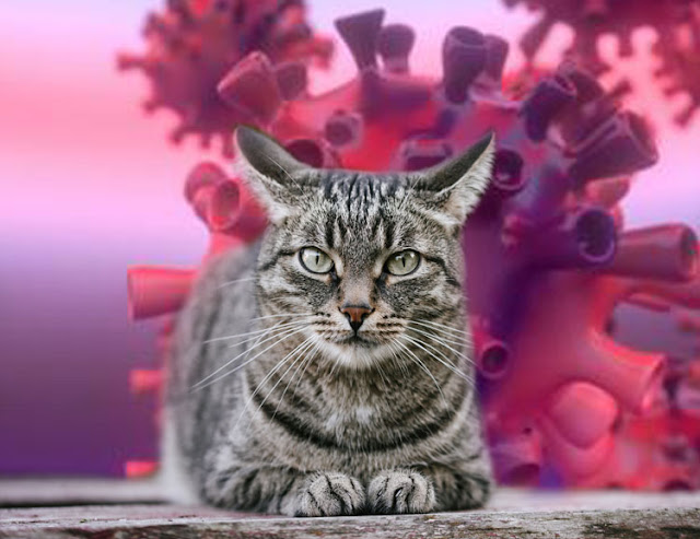 Cat owners ignore information about transmitting Covid-19 to their cat