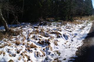 Schneebedecktes Laub