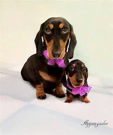 Doxies are the best