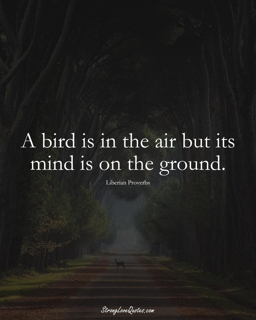 A bird is in the air but its mind is on the ground. (Liberian Sayings);  #AfricanSayings