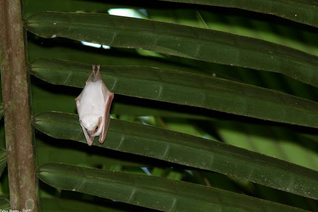 Ρουζ η νυχτερίδα