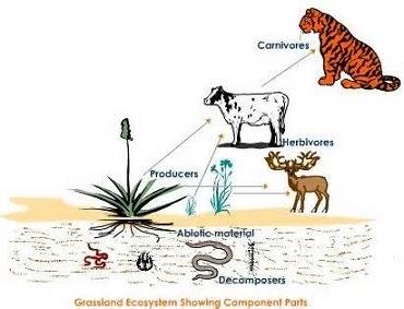 Biotic Components