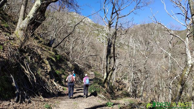 Sendero entre el bosque en Robledo, Somiedo