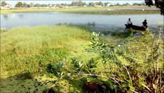De l'herbe envahissante sur le lac...