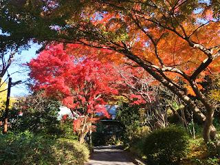 浄妙寺の紅葉