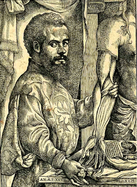 Portrait of Vesalius from his De humani corporis fabrica