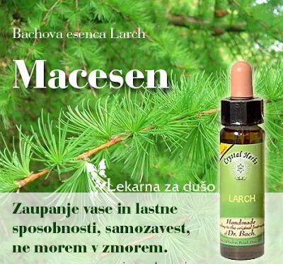 http://bit.ly/Macesen