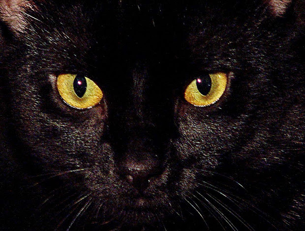 Anime Black Cat with Red Eyes