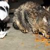 Kisah Nyata Berkat Menyelamatkan Kucing, Saya Selalu Dimurahkan Rezeki, Hingga Kaya Raya