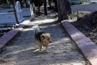 Cesur es un perro que sale de casa cada mañana, te emocionará adonde va