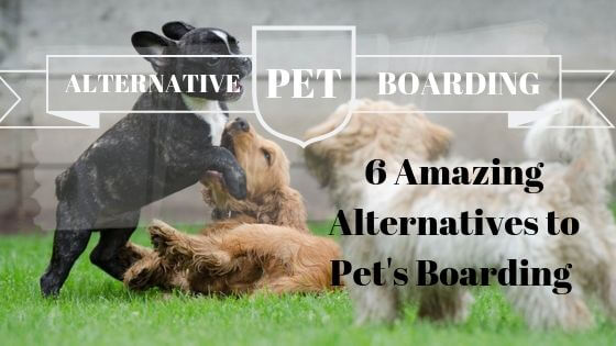 Ease Your Pet: 6 Amazing Alternatives to Pet's Boarding