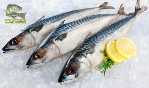 فوائد أسماك الماكريل الصحية وأنواعها وطرق الطهي | سمك الماكريل للحامل