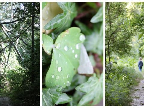 Passeggiando nel bosco ...