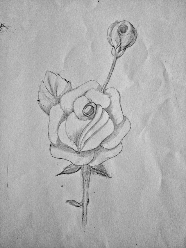 How to Draw a Rose Flower( Step by Step for Beginners and for Kids) in  7 Easy Step