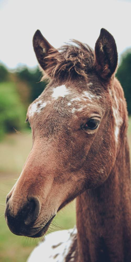 literatura paraibana criacao cavalo causo anedota