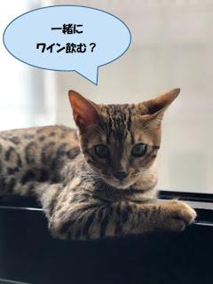 猫もピアノ音楽とイタリアワインが好き
