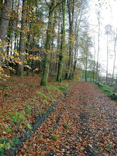 forest lane covered in Autumn leaves