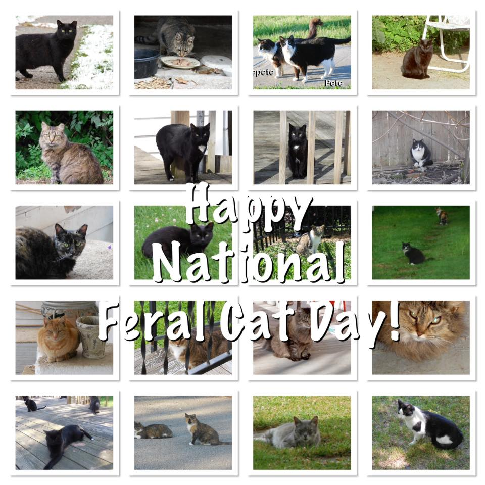 National Feral Cat Day Wishes Awesome Picture