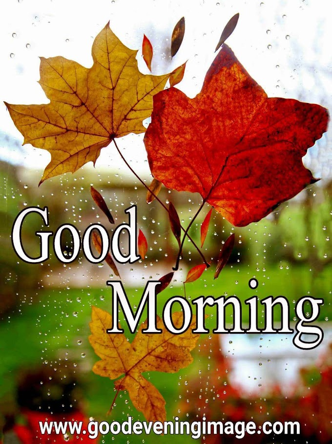Best Good Morning images | Good Morning wishes and Pictures