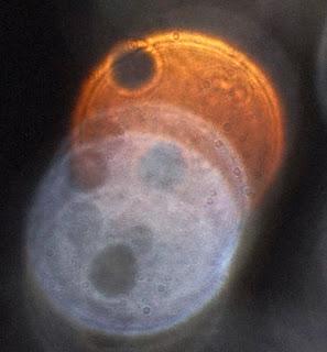 weird orange orb