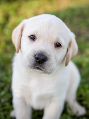 Rüyada köpek görmek ne anlama gelir ?Rüyada siyah köpek görmek?i Rüyada beyaz köpek görmek? Rüyada köpek saldırması? Rüyada köpek yavruları görmek?Rüyada köpek sevmek ?