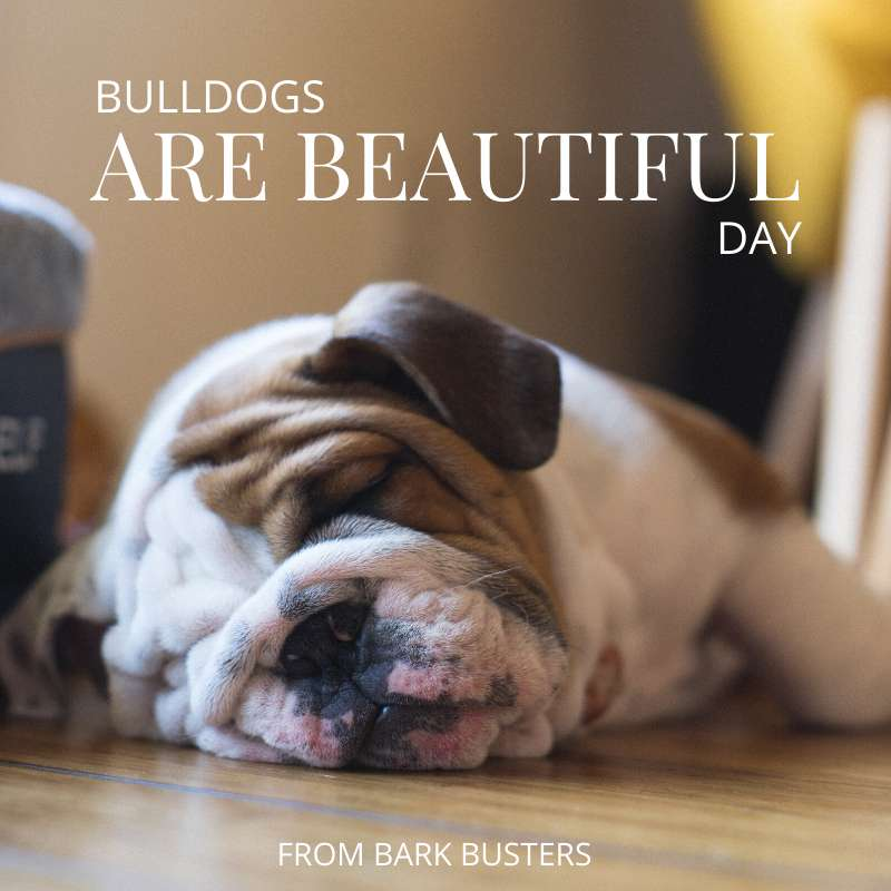 National Bulldogs Are Beautiful Day Wishes