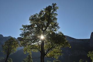 Ein Baum als Symbol für die eigene Persönlichkeitsentwicklung