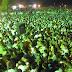 Baba Qalandar Hussain Qalandar Shahnshah Jilali Urs Celebrated