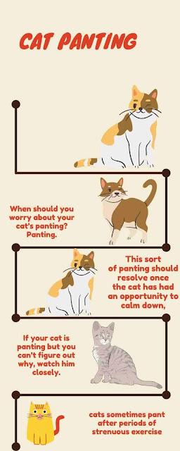cat-panting