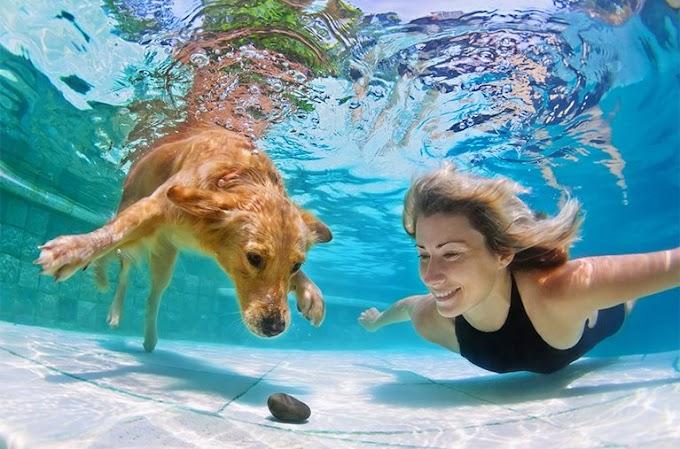 Mua hóa chất bể bơi chất lượng, giá tốt ở đâu?