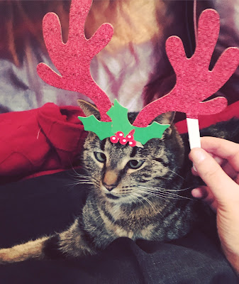 A cross-eyed tabby cat with reindeer antlers