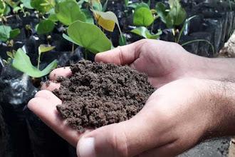 Cumpridores de pena plantam mudas em Santa Cruz do Capibaribe