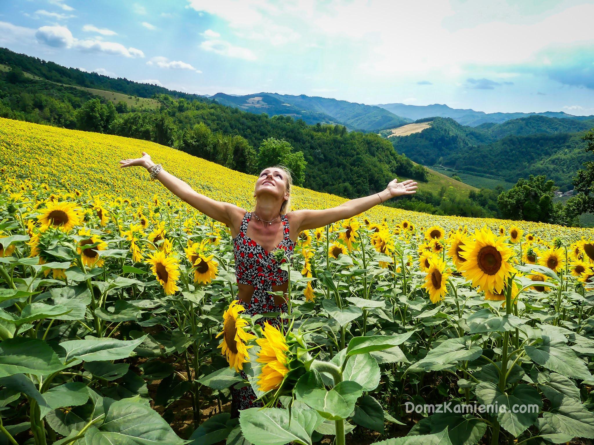 Kasia z Domu z Kamienia, blog, słoneczniki toskańskie