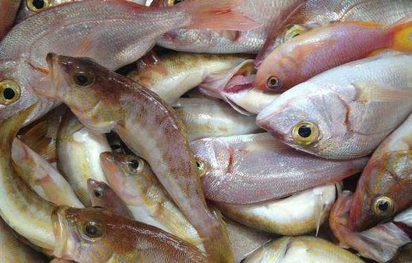 Πως ξεχωρίζουμε τα φρέσκα ψάρια