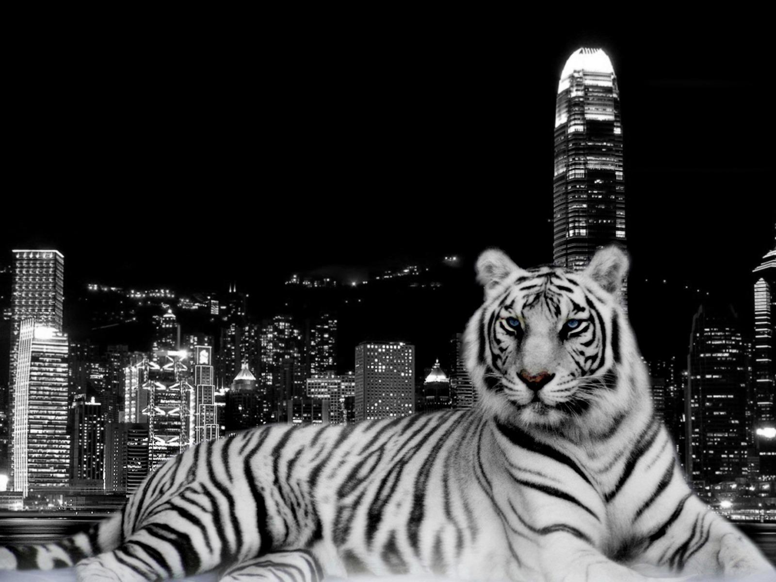 Tiger Wallpaper Black And White Hd