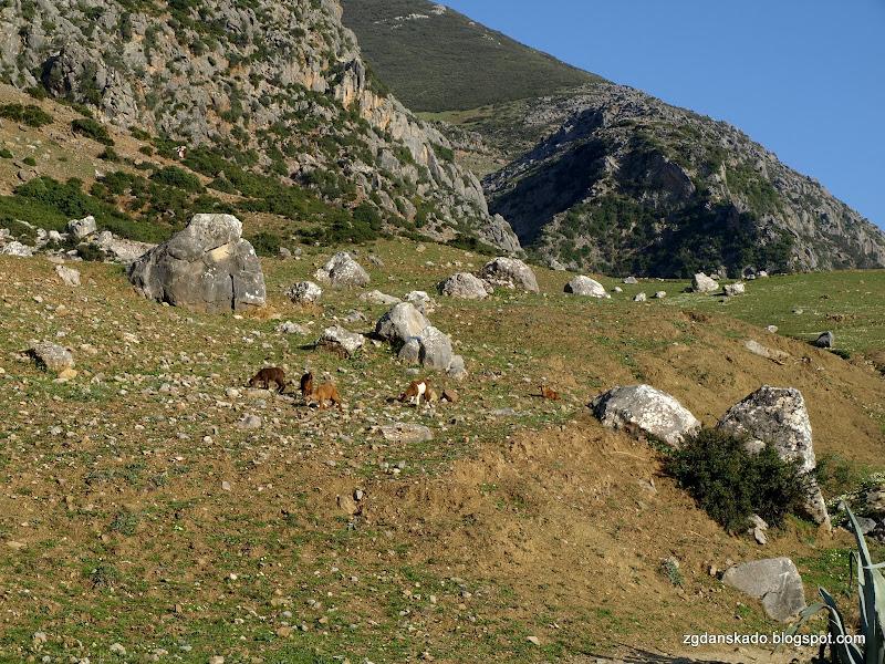 Góry Rif obok Chefchaouen