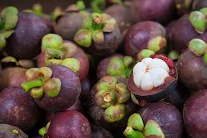 Tak Disangka! Pengobatan Herbal untuk Penderita Asam Urat Ini Paling Dicari