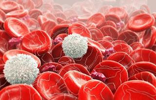 Kan nedir? Nasıl oluşur? Görevleri nelerdir?