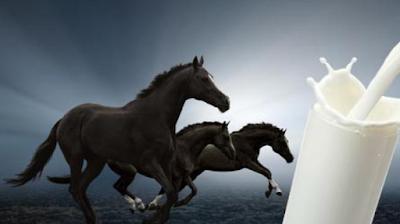 Manfaat Susu Kuda