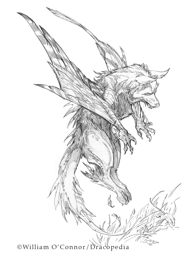 The Dracopedia Project