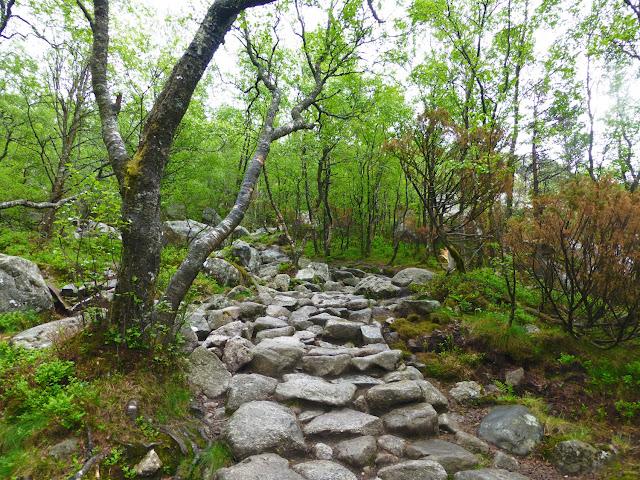 Camino entre bosques en la ruta al Preikestolen