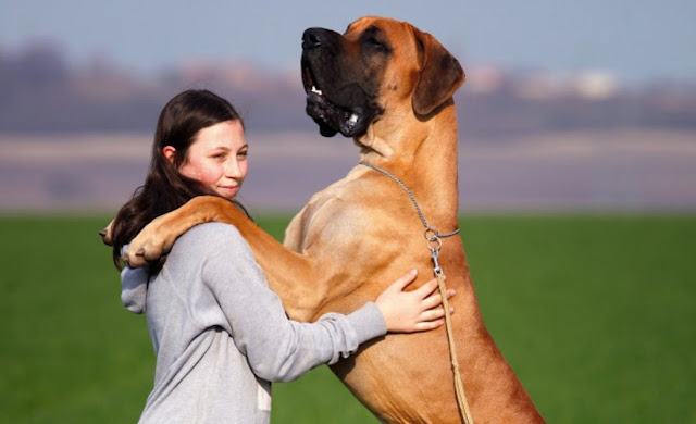 Enormous Dog Breeds