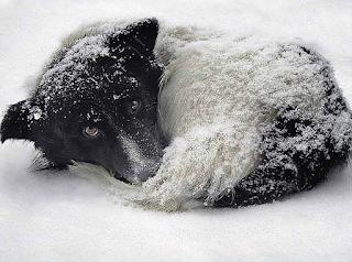 Фото бездомных собак зимой