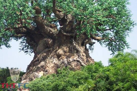 """5 điều kiện tiên quyết để tạo nên một cây """"đại thụ"""" mà ai cũng cần phải nên biết"""