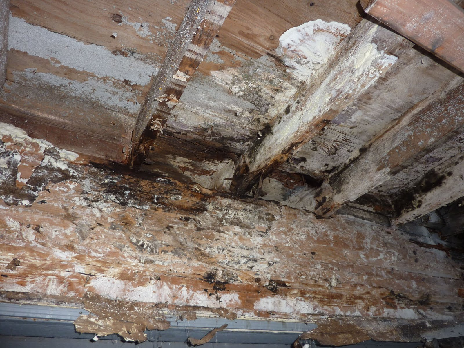 My San Diego Home Inspector Mold And Wood Decay