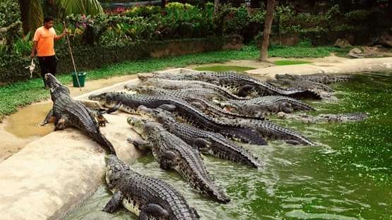 Crocodile's Protection in the World