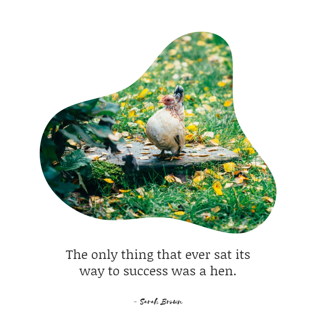 Funny Inspirational Work Quotes -1234bizz: (The only thing that ever sat its way to success was a hen - Sarah Brown)