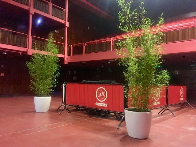 Grote bamboe kopen of huren niet woekerend phyllostachys Aurea
