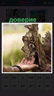 655 слов на протянутую руку дает свою лапу зверек из норы в дереве 6 уровень