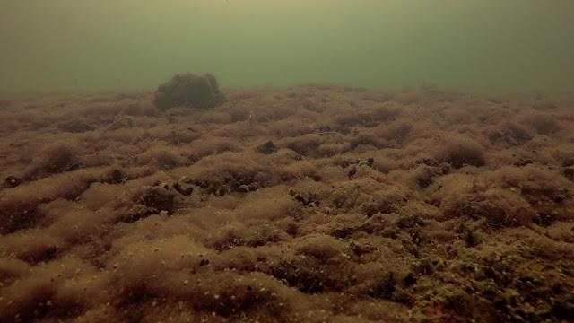 Paksu levämatto peittää pohjaa veden alla
